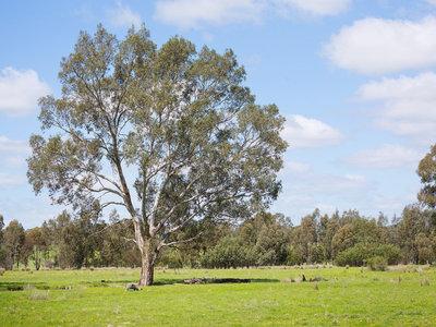 Muckleford Gower Land, Muckleford