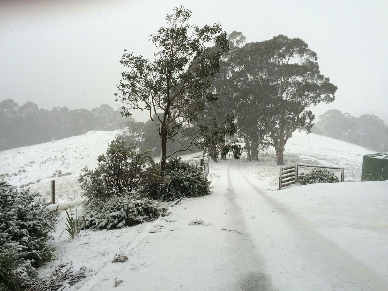 Snow in the Jeeralangs
