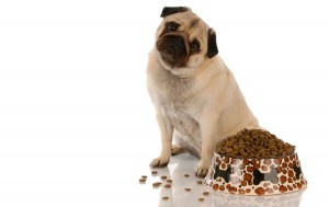 10 GOOD REASONS TO CONSIDER RENTING TO A PET OWNER