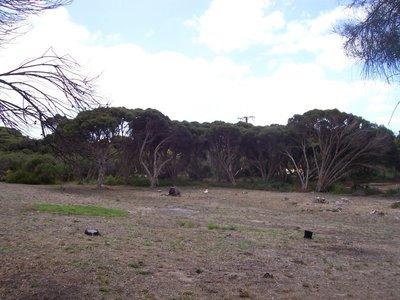 47 Scarlet Runner Road, The Pines