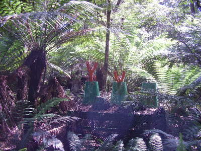 Tarkine Forest Adventures